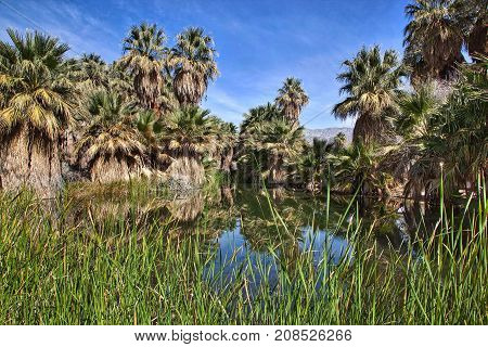 Desert Oasis at Thousand Palms California in the Coachella Valley