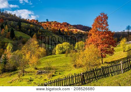 Deep Autumn Sunny Day In Mountainous Rural Are
