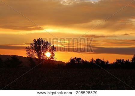 The sun rises behind a tree making an orange colored sunrise.