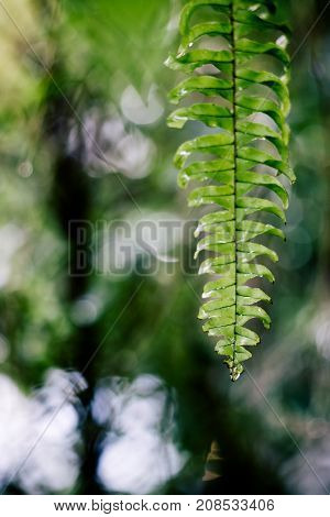 Fern leaf with water drops and blurry background