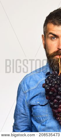 Winegrower Showing Half Of His Face Holds Cluster Of Grapes.