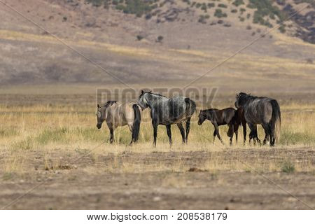 a herd of wild horses in the Utah desert