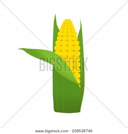 Healthy Vegetables With Corn, Vitamins And Minerals