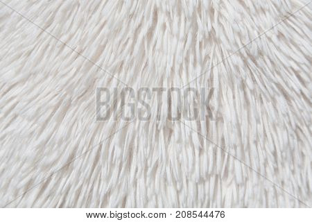 White fur texture.Useful as background
