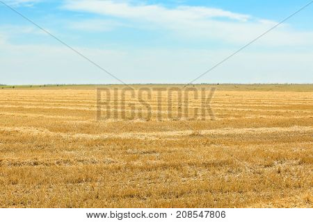 Landscape of wheat field after harvesting