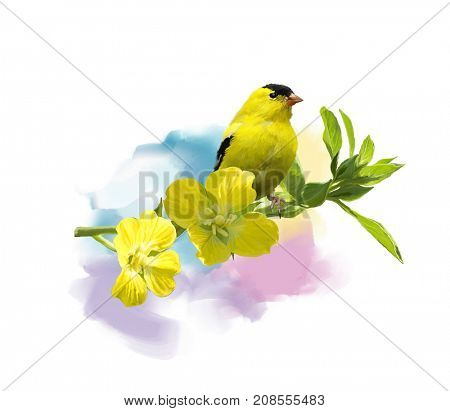 Digital Painting of  American Goldfinch with the yellow flowers