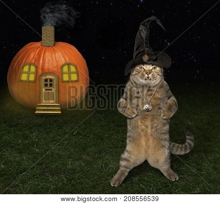 The cat in the witch hat is standing next to a pumpkin house.