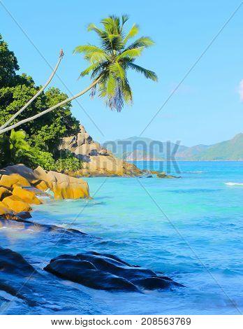 Wallpaper Palms Sea