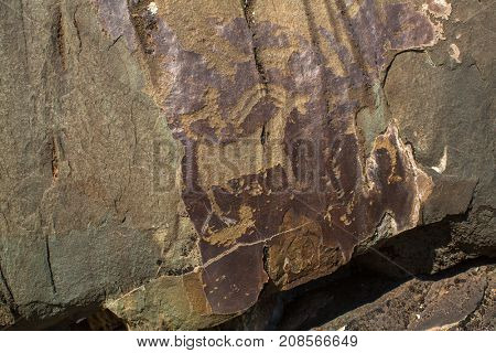 Petroglyphs of Altay. Ancient rock paintings in the Altai Mountains, Russia.