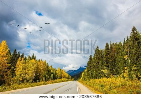 Migratory birds fly in flocks. The grandiose nature of the Rockies of Canada. The magnificent Highway 93