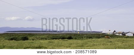 Wide view of a horse grazing in a farm field with an old barn on the left and the Saint Lawrence Seaway and the low mountains in the distance near Riviere du Loup, Quebec on a bright sunny day with blue skies and clouds in August.