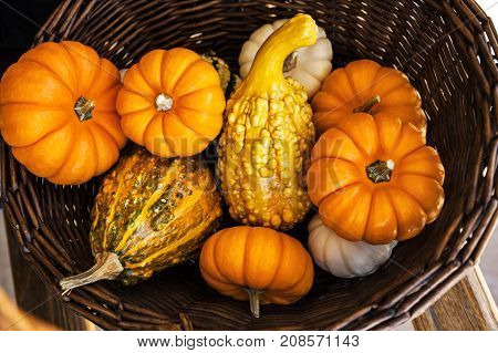 Plenty Pumpkins collected in the Wicker Basket for Halloween and Thanksgiving in the Autumn Season Holiday Concept Top View