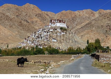 Gompa - Tibetan Buddhist Monastery In Ladakh, North India. Road Leading To Buddhist Monastery With M