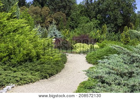 Different Species Of Coniferous Shrubs And Trees In The Park. Th