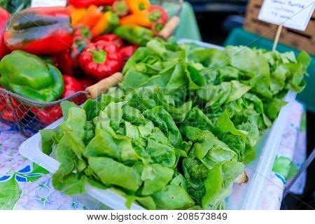 Freshly Picked Organic Lettuce On Farmer's Market.