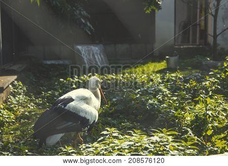 White stork alone bird in the zoo