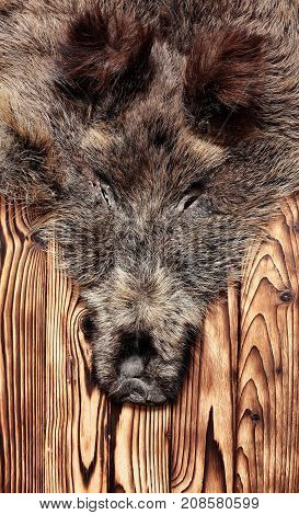 Wild Boar Fur With Head, Hunting Trophy, On Wooden Floor.copy Space. Close Up.concept Hunters Trophi