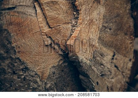 Wood texture and background.  Cut tree trunk texture. Macro view of cut tree trunk texture and background. Wood abstract texture and background for designers. Timber industry. Wood textured.