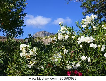 View of Roque del Conde mount (Table Mountain) in Torviscas Alto,Tenerife,Canary Islands,Spain.Vacation or travel concept.Selective focus.