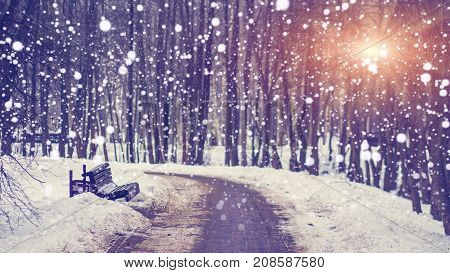 Snowfall in silent winter park at bright sunset. Snowflakes falling on snowy alley. Christmas and New Year theme. Xmas background