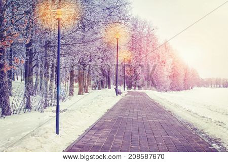Winter in evening park on sunset. Frosty trees on alley with lanterns. Christmas background. Xmas theme