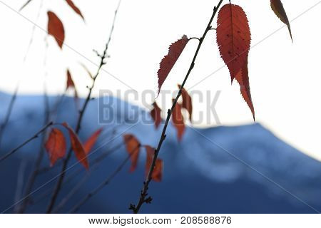 The autumn transforming the leaves in vivid red