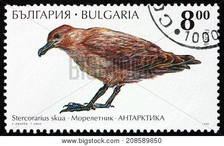BULGARIA - CIRCA 1995: a stamp printed in Bulgaria shows Great Skua Stercorarius Skua is a Large Seabird Antarctic Wildlife circa 1995