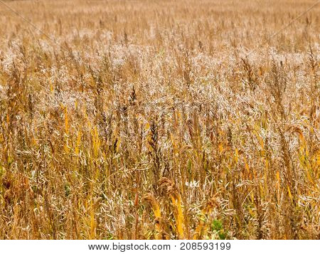 Autumn Crop Field Background Texture Agriculture Farming Industry
