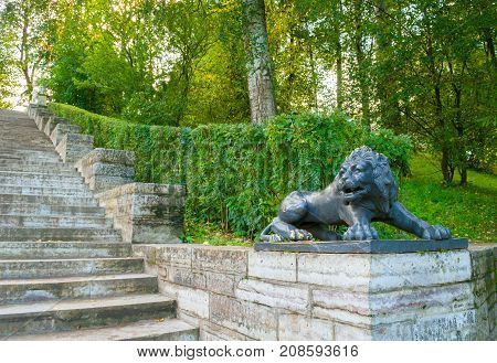 PAVLOVSK ST PETERSBURG RUSSIA - SEPTEMBER 21 2017. Large stone staircase and sculpture of a black lion on a pedestal in Pavlovsk park near St Petersburg Russia