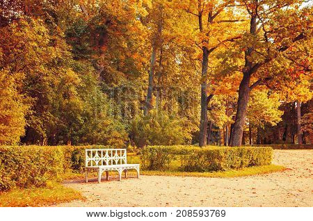 Autumn landscape. Bench in the autumn park under colorful autumn trees. Vintage tones applied. Cloudy autumn landscape scene of yellowed autumn trees in the autumn park. Colorful autumn nature
