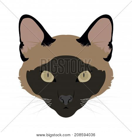 Isolated burmese cat avatar on a white background, Cat breed, Vector illustration