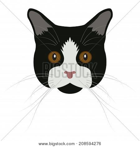 Isolated manx cat on a white background, Cat breed, Vector illustration