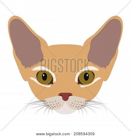 Isolated devon rex cat avatar on a white background, Cat breed, Vector illustration