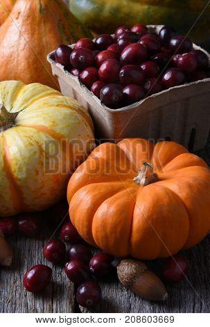 Autumn Still Life: Vertical shot with decorative pumpkins gourds and basket of fresh cranberries.