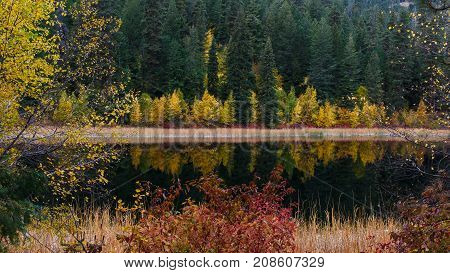 Colorful Autumn reflection at a quiet mountain lake with cattails by the shoreline and a hillside forest of evergreen trees mixed with colored deciduous trees.