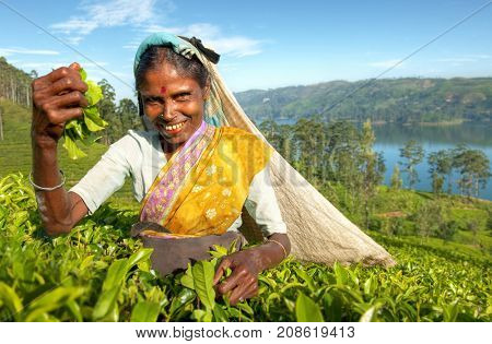 Tea picker at a plantation in Sri Lanka