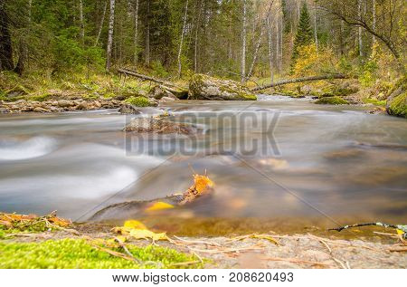 Wild mountain nature in the summer. Forest with tall trees and a creek with large stones