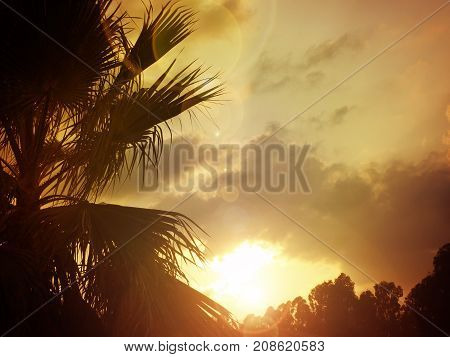 Sunset with a palm tree in a tropical landscape vacation or travel concept background