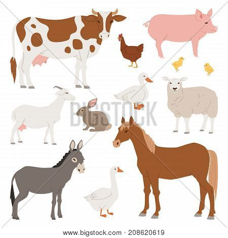 Different home farm vector animals and birds like cow, sheep, pig, duck set illustration. Cartoon mammal comic farmers animals design agriculture isolated on white nature background.