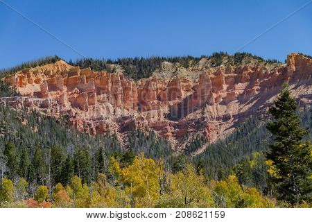 Cedar Breaks National Monument, Utah in the autumn with Golden foliage amongst pine trees.