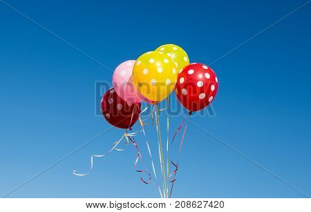 colored balloons against the blue sky birthday decoration