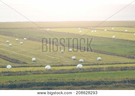 White Hay Rolls on a Green Field of Iceland. Horizontal shot