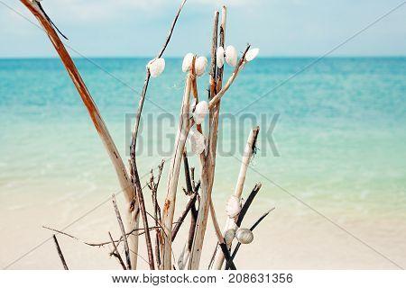 white sea shells on tropical sea view background