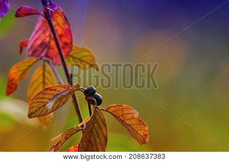 SHRUB - Twig of a forest bush in autumn