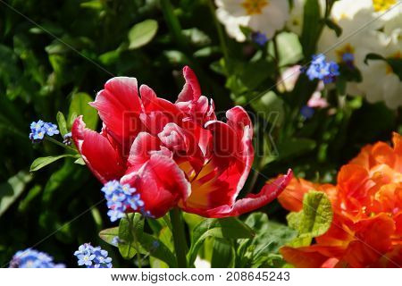 FLOWERS IN THE SENSATIONAL COLORS -  SHE (IT) REPRESENT THE NATURE, THE SUMMER.