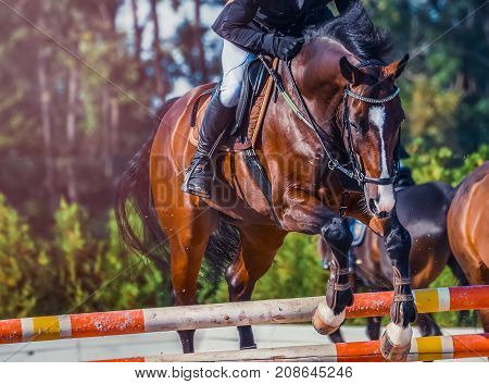 Bay dressage horse and rider in uniform performing jump at show jumping competition. Equestrian sport background. Bay horse portrait during dressage competition. Selective  focus.