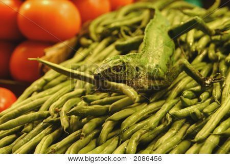 Lizard And Beans