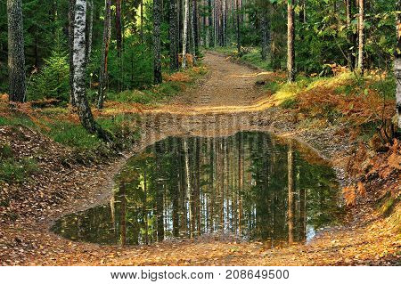 old soil road with puddle in the forest in autumn