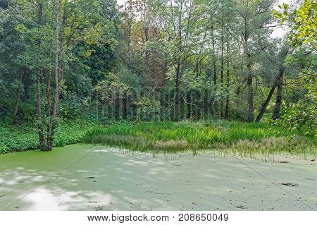 Lush green swamp and tropical forest scene. The sun is peaking through the thick foliage to reveal a gorgeous natural landscape.