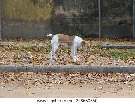 street dog abandoned victim of animal abuse